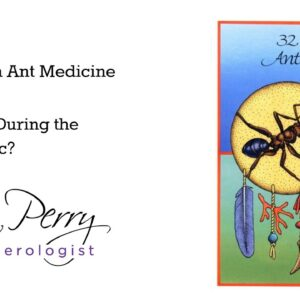 How Can Ant Medicine Help Us During the Pandemic?