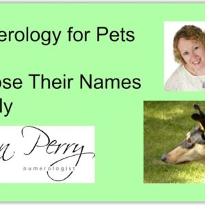 Numerology for Pets - Choose Their Names Wisely