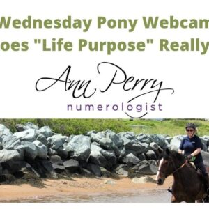 Wednesday Pony WebCam - What is Your Life Purpose?