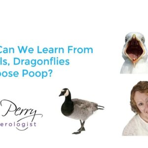 What Can We Learn From Seagulls, Dragonflies and Goose Poop?