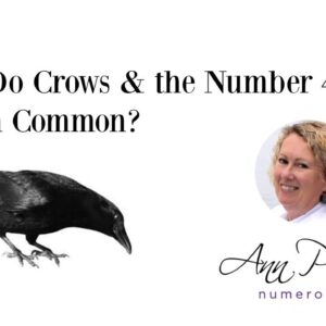 What Do Crows & The Number 4 Have in Common?