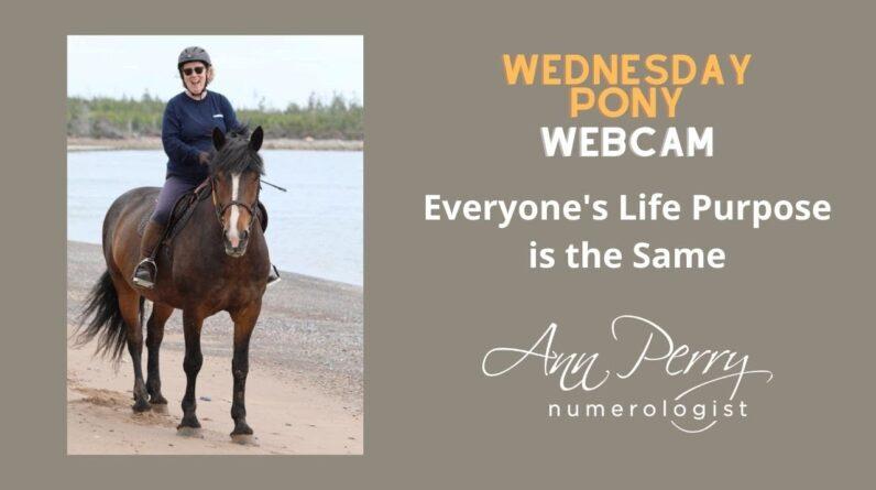 Wednesday Pony Webcam - Everyone's Life Purpose is the Same!